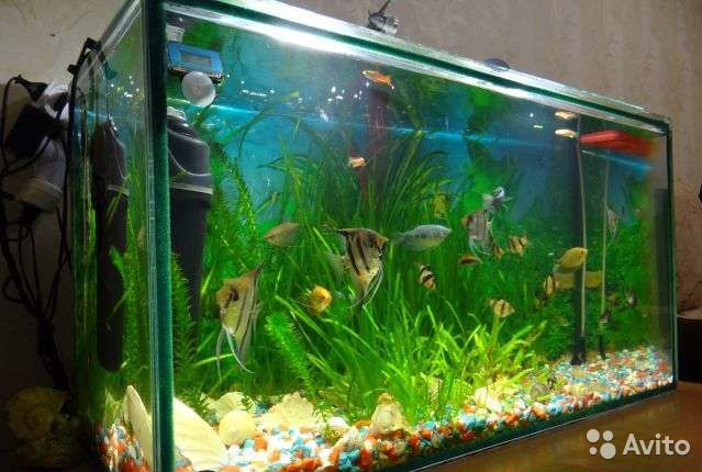 Дизайн аквариум 80 литров фото