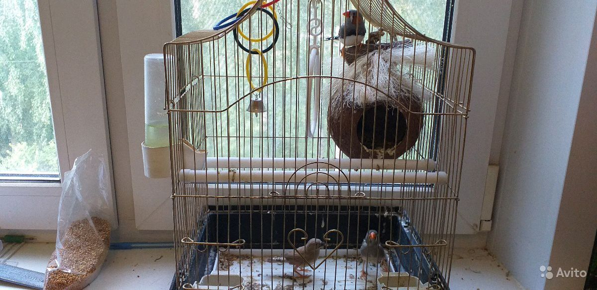 "Птички""амодины"""