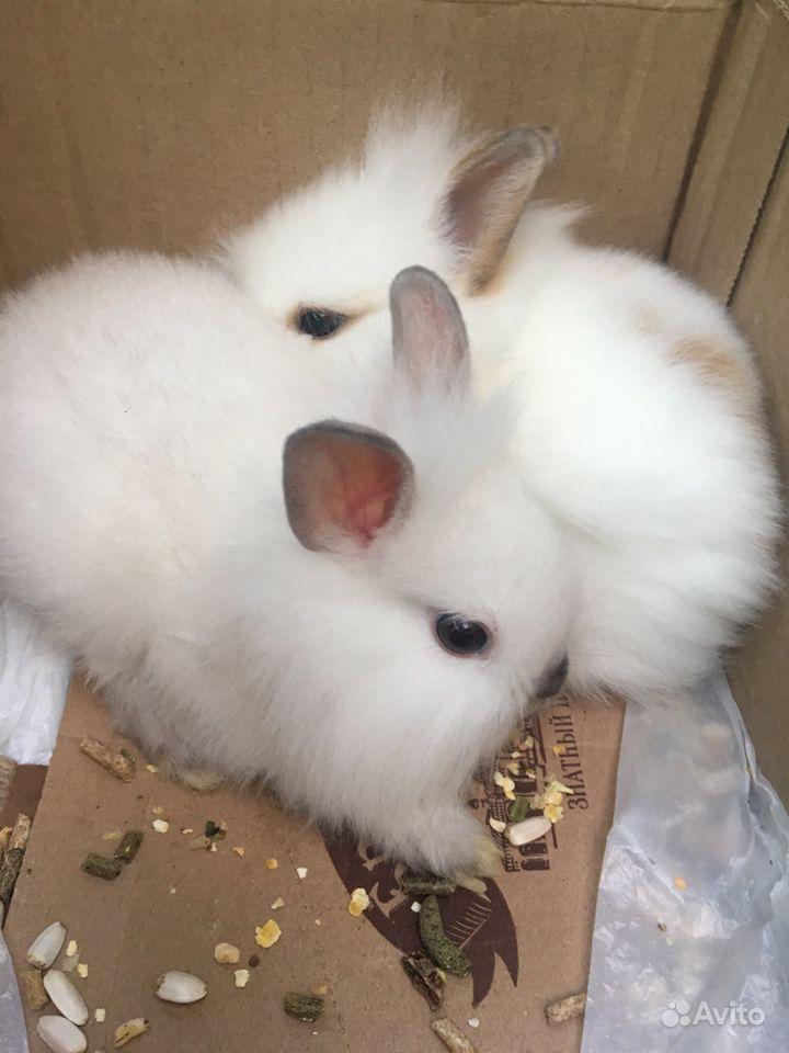 Карликовые кролики, Девочка и мальчик