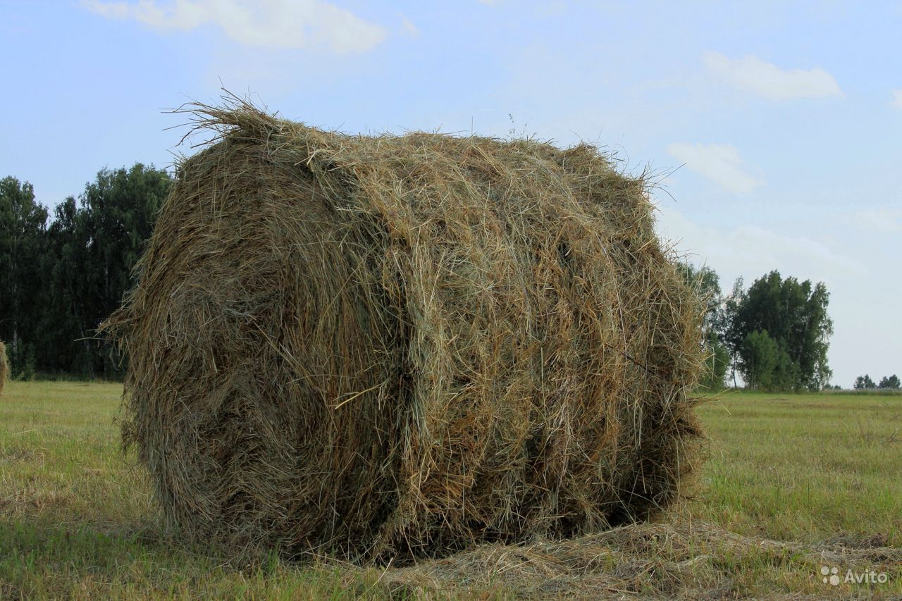 Продам сено в рулонах по 350 кг рулон