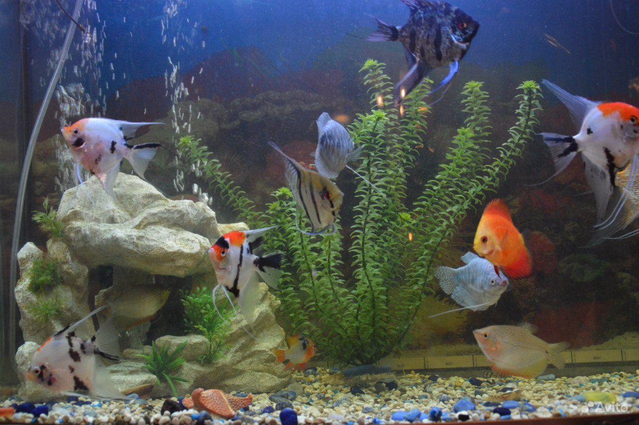 Аквариум Tetra Тетра 130 литров Tetra Aqua Led 130 купить на Зозу.ру - фотография № 5
