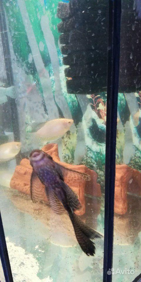 Рыбки большие купить на Зозу.ру - фотография № 4