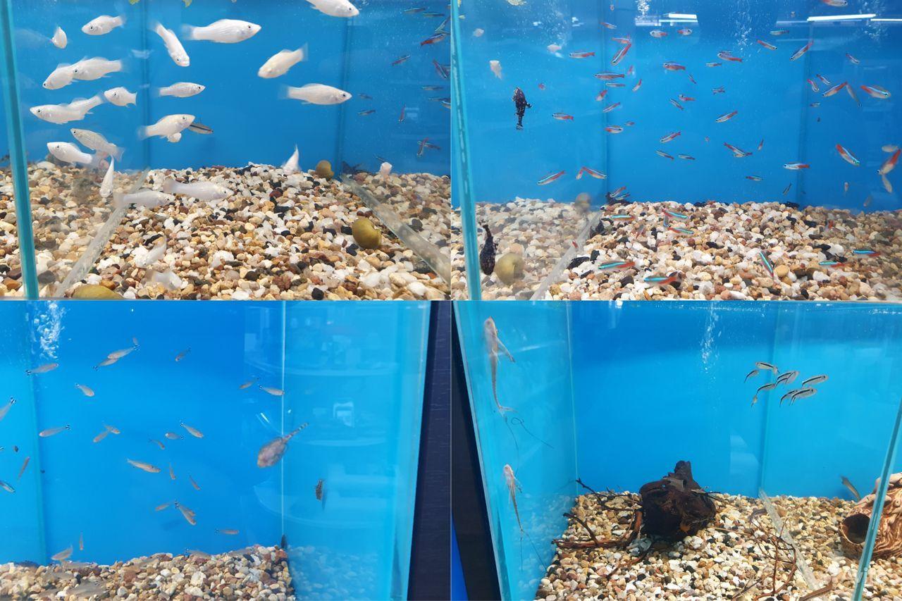 Аквариумные рыбки купить на Зозу.ру - фотография № 2