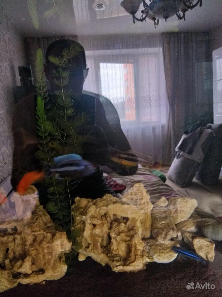 Малавийские цихлиды купить на Зозу.ру - фотография № 5
