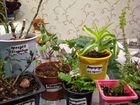 Комнатные растения, детки