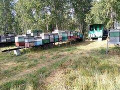 Пчелосемья
