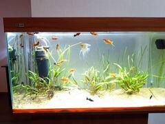 Аквариум с тумбой, оборудованием, рыбками, растени