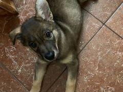 Собака Плюшечка