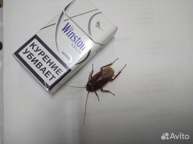 Объявления куплю тараканов свежие вакансии в москве для анестезиолога