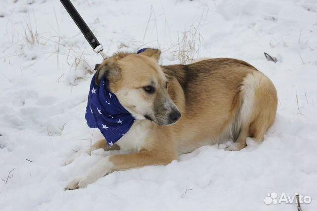 Добрый и внимательный пёс Лари ищет семью купить на Зозу.ру - фотография № 6