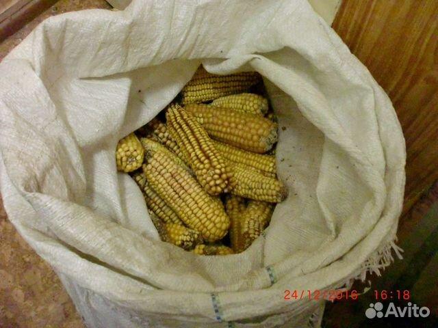 Кукурузы в початках продажа