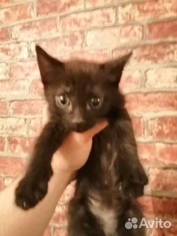 Отдам котят в добрые руки купить 5