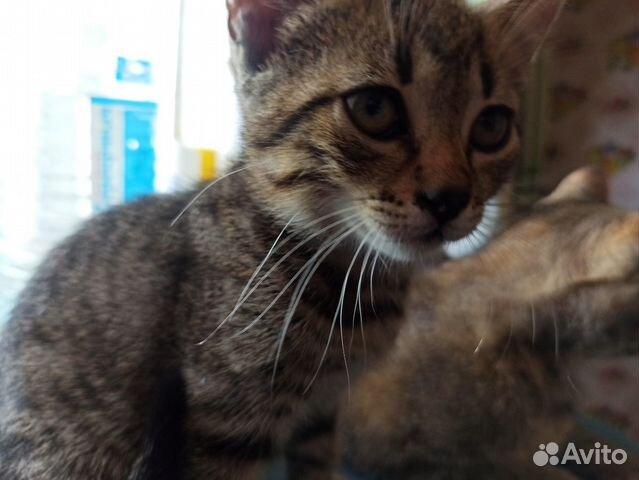 Котята ищут дом(двое)  купить 4
