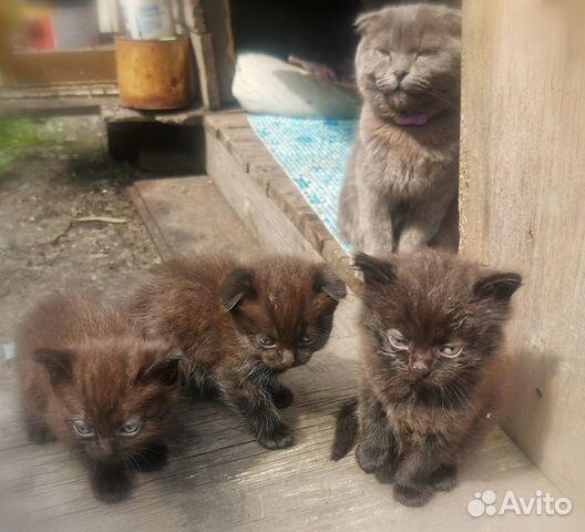 Отдам котят  89505804290 купить 1