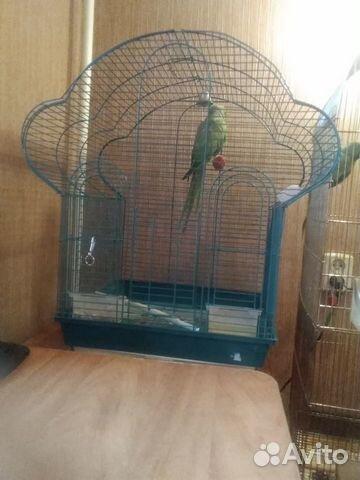 Bird cage  89103591036 köp 4