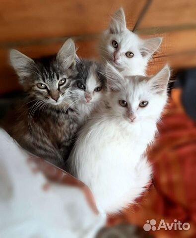 Katt  89196085946 köp 1