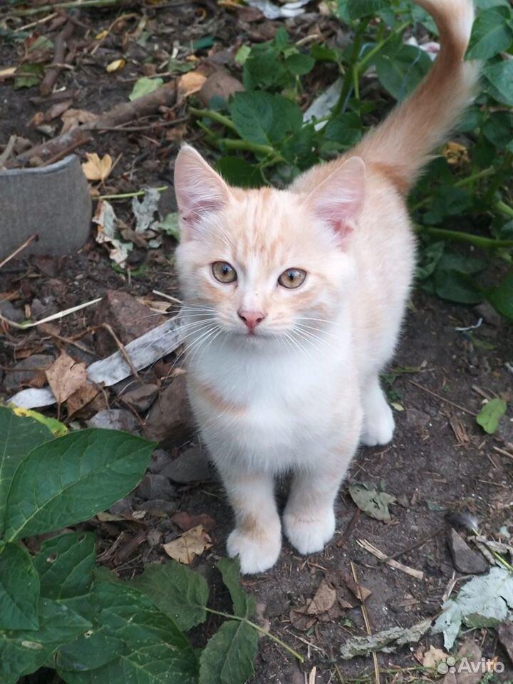 Котята отдам в добрые руки бесплатно  89206054210 купить 1
