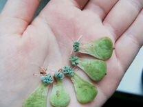 Малышки эхеверии (5 листиков)
