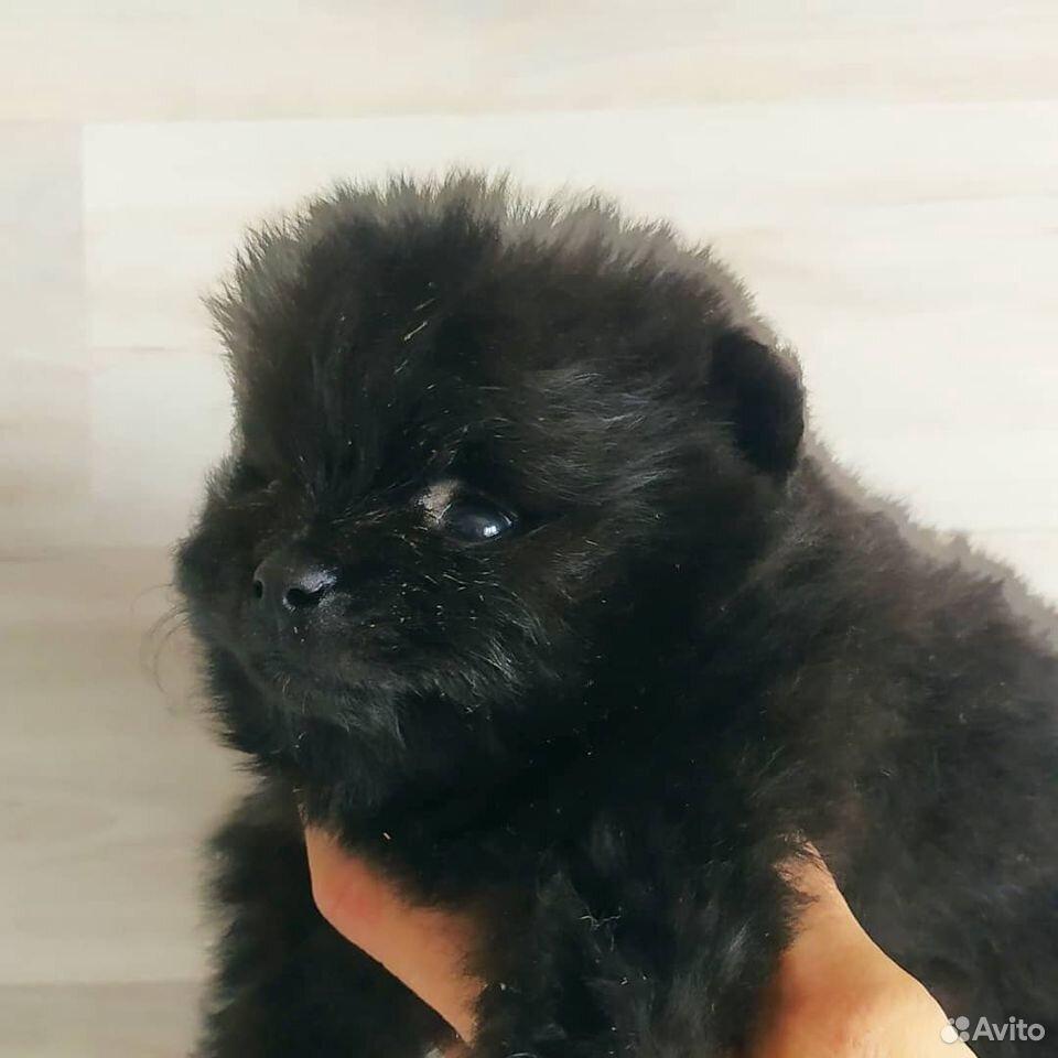 Собака  89631081101 купить 5