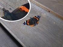 41 реальных мегапикселей,смотрите фото. Carl Zeiss