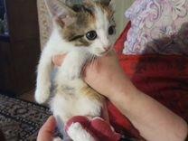 Котята ищут самых лучших хозяев и дом