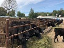 Продам животноводческий комплекс крс Малоярославец