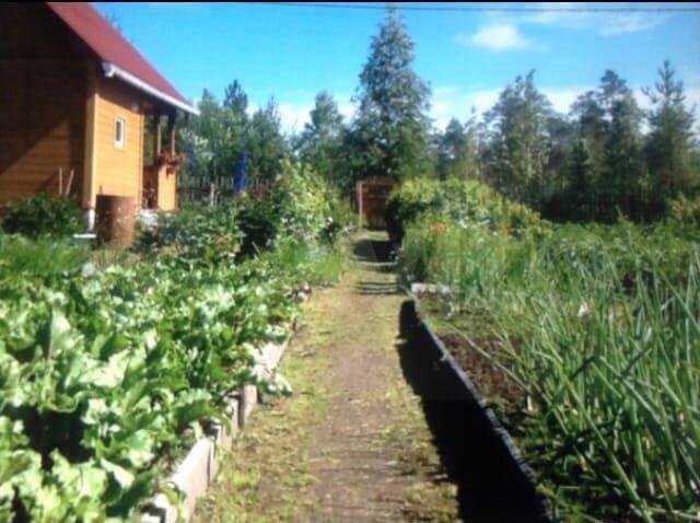 Cottage 35 m2 on plot 12 hundred.