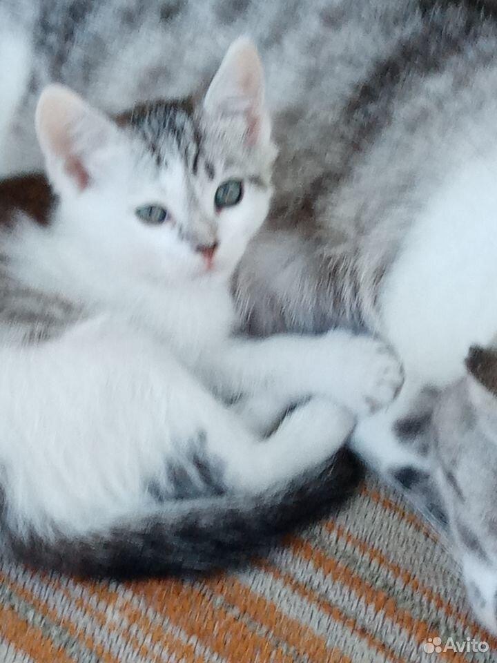 Отдам котенка  89033341281 купить 2