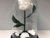 Роза в колбе белая