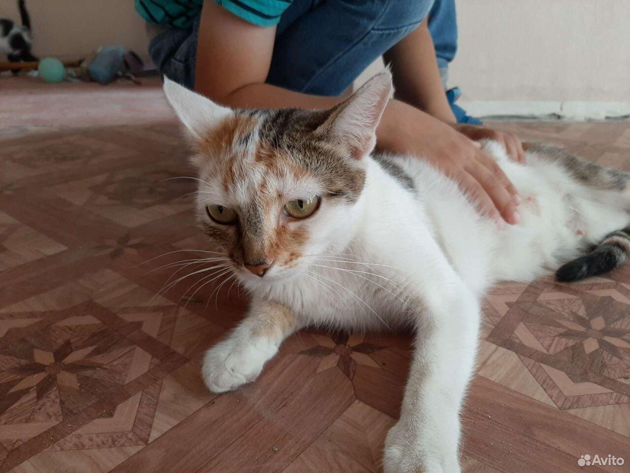 Кошка  89610008181 купить 5