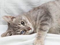 Котик ищет дом — Кошки в Геленджике