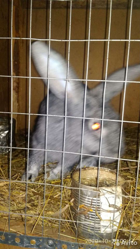 Кролик  89835018830 купить 4