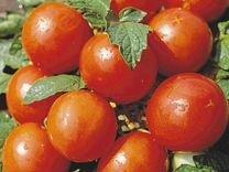 Рассада томатов, перцев и цветов