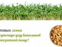 Автоматический проращиватель семян